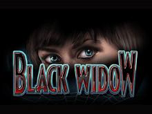 Выигрыши в популярном игровом автомате Black Widow