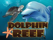 Dolphin Reef – игровой автомат в онлайн клубе